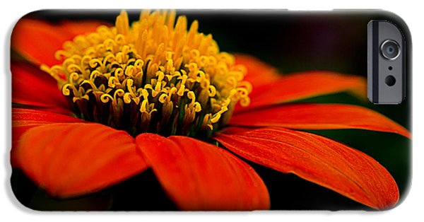 Zinnias iPhone Cases - Zinnia Bright Orange Macro iPhone Case by Julie Palencia