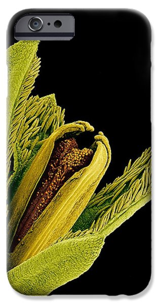 Disc iPhone Cases - Zinnia Disc Floret iPhone Case by Susumu Nishinaga