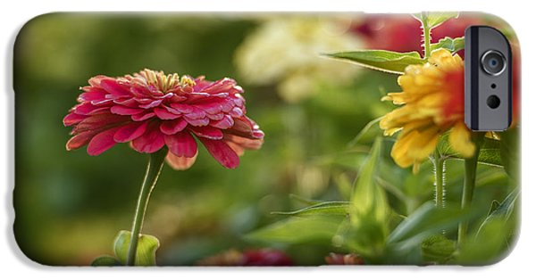 Zinnias iPhone Cases - Beautiful Zinnia flowers iPhone Case by Vishwanath Bhat