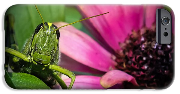 Going Green iPhone Cases - Zinnia Surprise iPhone Case by Karen Wiles