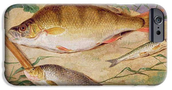 Young Paintings iPhone Cases -  An Anglers Catch of Coarse Fish iPhone Case by D Wolstenholme