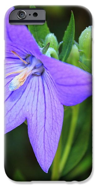 August Balloon Flower iPhone Case by Marjorie Imbeau