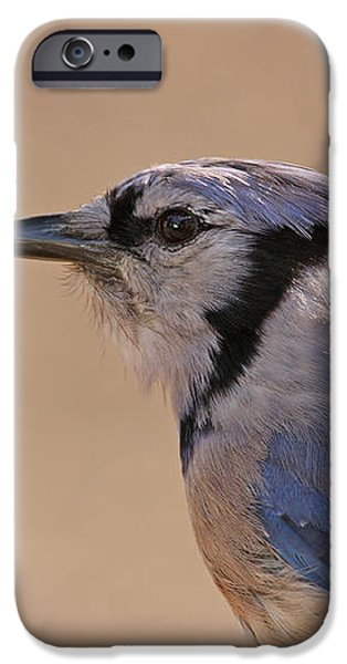 Blue Jay posing iPhone Case by David Cutts