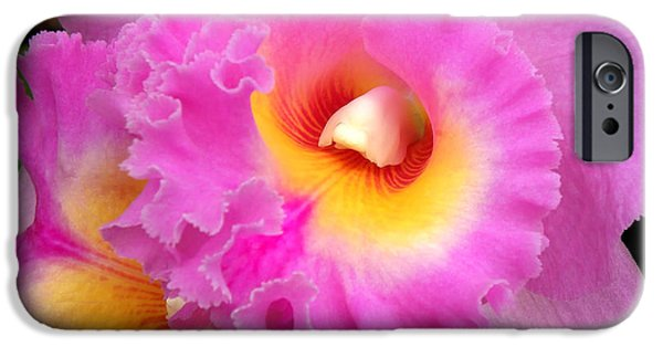 Cattleya iPhone Cases -  Cattleya Orchid 1 iPhone Case by Julie Palencia