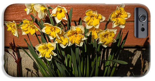 Haybale iPhone Cases -  Daffodils iPhone Case by Robert Bales