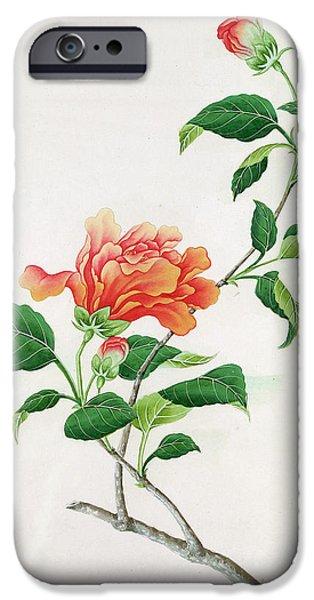 19th Century iPhone Cases -  Hibiscus iPhone Case by Georg Dionysius Ehret