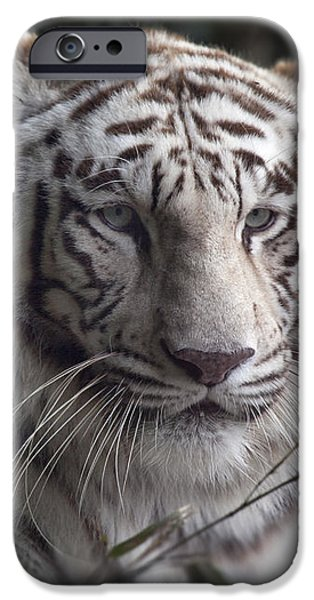 The Tiger's  Watchful Eye iPhone Case by Heinz G Mielke