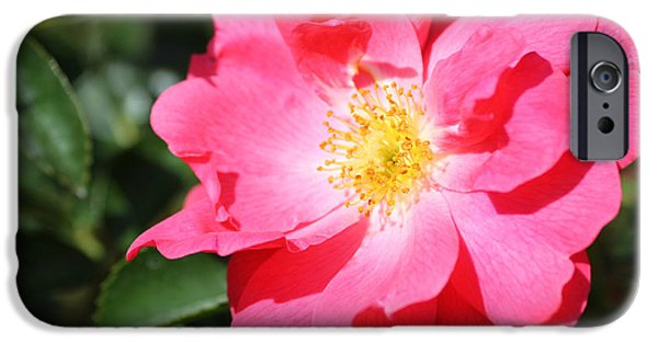 Beauty Mark iPhone Cases - 06182012 012 iPhone Case by Mark J Seefeldt