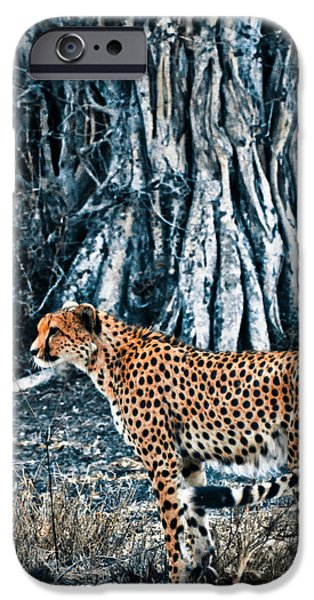 Duo Tone iPhone Cases - Alert Cheetah iPhone Case by Darcy Michaelchuk