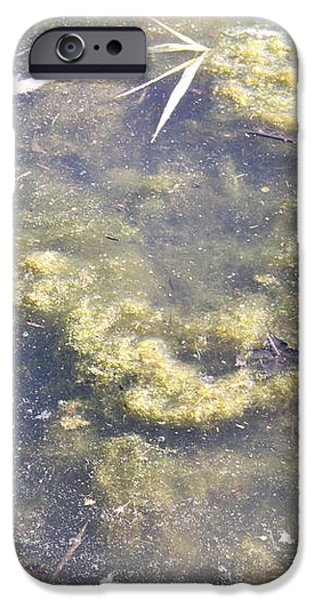 Algae Bloom In A Pond iPhone Case by Photo Researchers, Inc.
