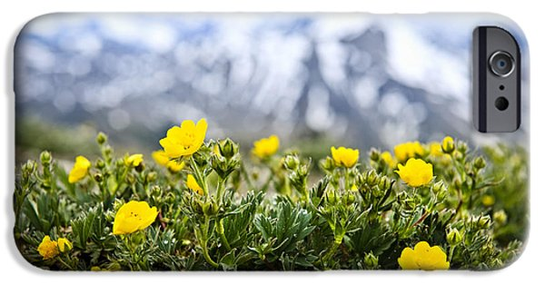 Meadow Photographs iPhone Cases - Alpine meadow in Jasper National Park iPhone Case by Elena Elisseeva