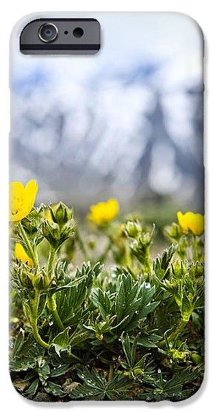 Alpine meadow in Jasper National Park iPhone Case by Elena Elisseeva