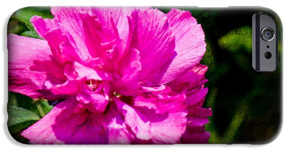 Althea iPhone Cases - Althea Blossom iPhone Case by Barry Jones
