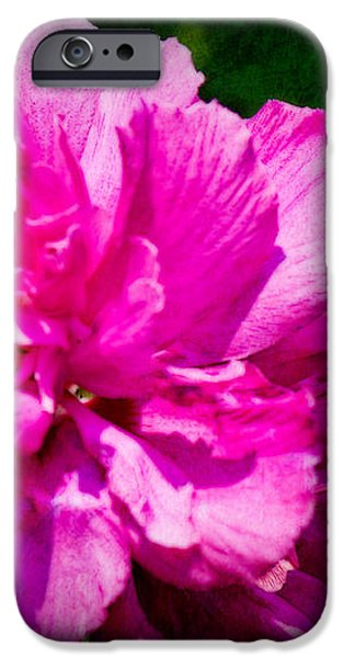 Althea Blossom iPhone Case by Barry Jones