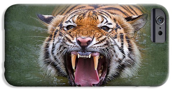 Growling iPhone Cases - Angry Tiger iPhone Case by Louise Heusinkveld