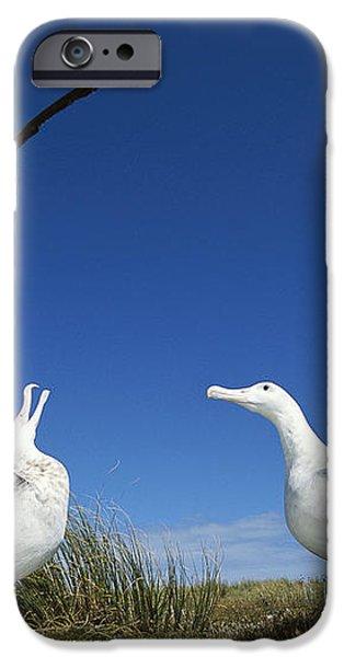 Antipodean Albatross Diomedea iPhone Case by Tui De Roy
