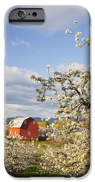 Apple Blossom Trees And A Red Barn In iPhone Case by Craig Tuttle