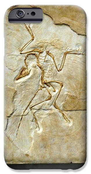 Palaeontology iPhone Cases - Archaeopteryx Fossil, Berlin Specimen iPhone Case by Chris Hellier