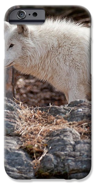 Arctic Wolf iPhone Case by Michael Cummings