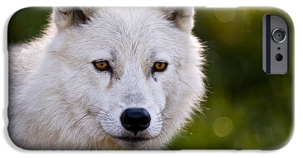 Wildlife Photographer Mixed Media iPhone Cases - Arctic Wolf Portrait iPhone Case by Michael Cummings