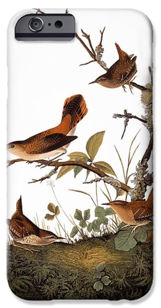 Wren iPhone Cases - Audubon: Wren iPhone Case by Granger