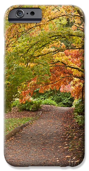 Berry iPhone Cases - Autumn Path iPhone Case by Mike Reid