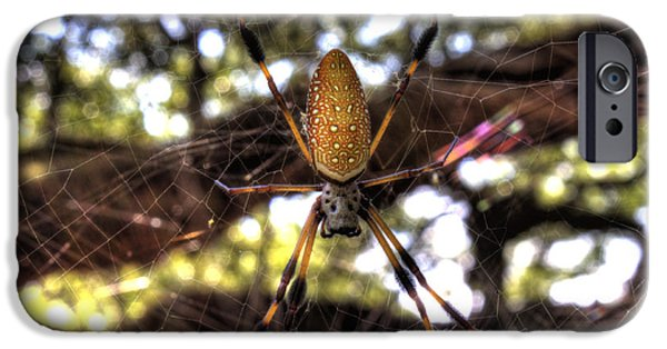 Weave iPhone Cases - Banana Spider iPhone Case by Dustin K Ryan