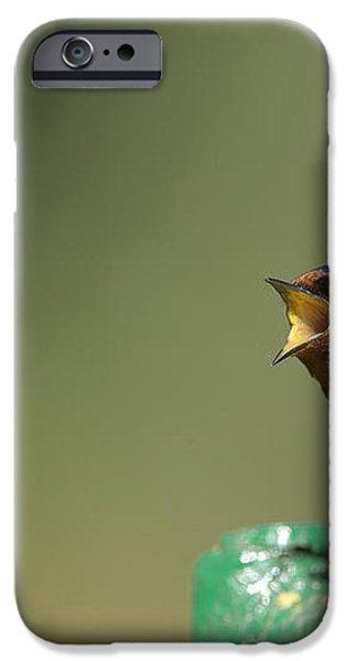 Barn Swallow Hirundo Rustica Fledgling iPhone Case by Cyril Ruoso