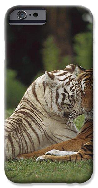 Bengal Tiger Panthera Tigris Tigris iPhone Case by Konrad Wothe