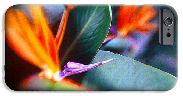 Paradise. Flower Photographs iPhone Cases - Bird of Paradise iPhone Case by La Rae  Roberts