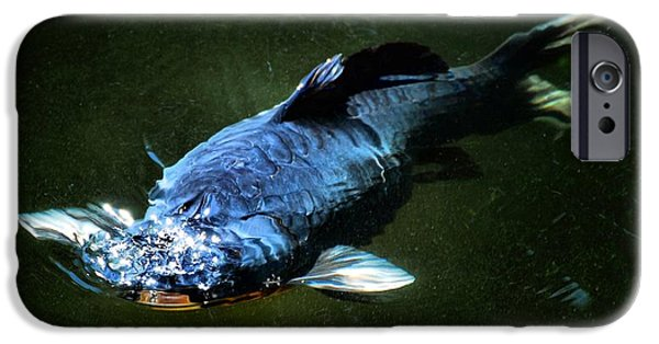 Butterfly Koi Photographs iPhone Cases - Black Koi rising iPhone Case by Don Mann