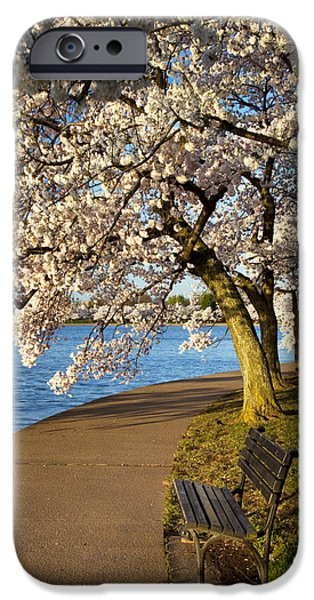 Cherry Blossoms iPhone Cases - Blossoming Cherry Trees iPhone Case by Brian Jannsen