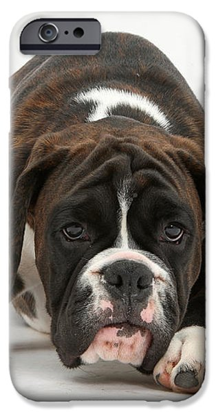 Boxer Pup iPhone Case by Mark Taylor