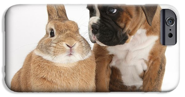 Boxer iPhone Cases - Boxer Puppy And Netherland-cross Rabbit iPhone Case by Mark Taylor