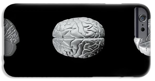 Cut-outs iPhone Cases - Brain Anatomy, Artwork iPhone Case by Claus Lunau