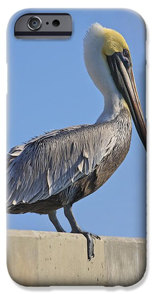 Aviary iPhone Cases - Brown Pelican iPhone Case by Adam Romanowicz
