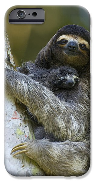 Animalsandearth iPhone Cases - Brown-throated Three-toed Sloth iPhone Case by Suzi Eszterhas