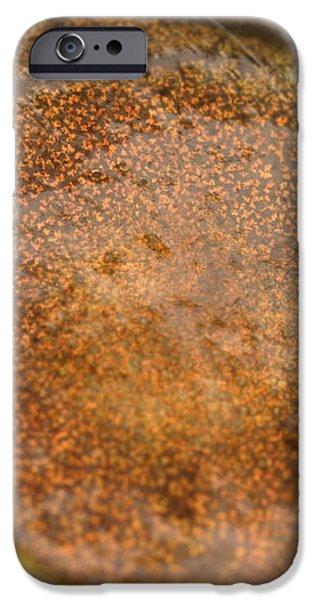 Bullfrog Ear iPhone Case by Ted Kinsman