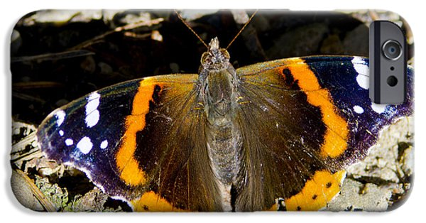 Nature Center Pond iPhone Cases - Butterfly iPhone Case by LeeAnn McLaneGoetz McLaneGoetzStudioLLCcom