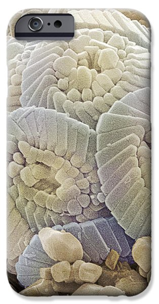 Calcareous Phytoplankton Fossil, Sem iPhone Case by Power And Syred