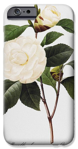 Camellia iPhone Cases - Camellia, 1833 iPhone Case by Granger