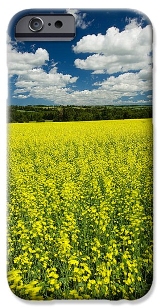 Industry iPhone Cases - Canola Field, Brookfield, Prince Edward iPhone Case by John Sylvester