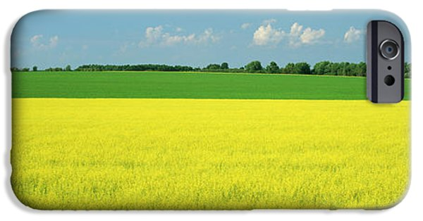 Canola Field iPhone Cases - Canola Field, Bruce Township, Georgian iPhone Case by Ron Watts