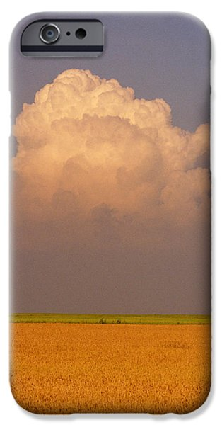 Canola Field iPhone Cases - Canola Field, Somerset, Manitoba iPhone Case by Mike Grandmailson
