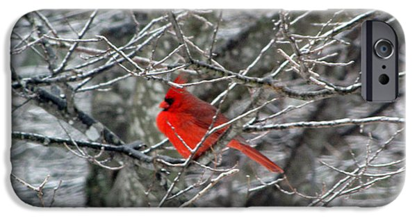 Icy iPhone Cases - Cardinal on Icy Branches iPhone Case by Amy Tyler