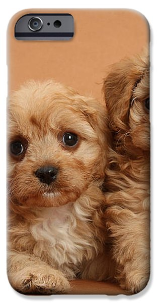 Cavapoo Pups iPhone Case by Mark Taylor