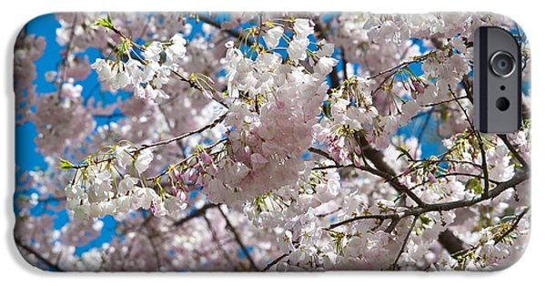 Pink Photographs iPhone Cases - Cherry Blossom iPhone Case by Sebastian Musial