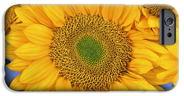 Agriculture iPhone Cases - Common Sunflower Group Showing iPhone Case by Tim Fitzharris