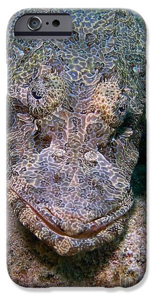 Crocodile Fish iPhone Case by Joerg Lingnau