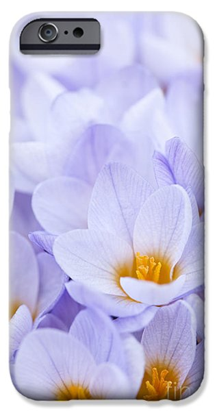 Violet Photographs iPhone Cases - Crocus flowers iPhone Case by Elena Elisseeva